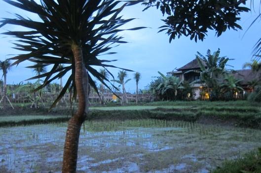 Bali 174