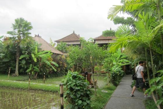 Bali 437