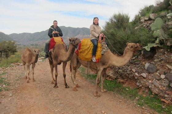 Camel 06
