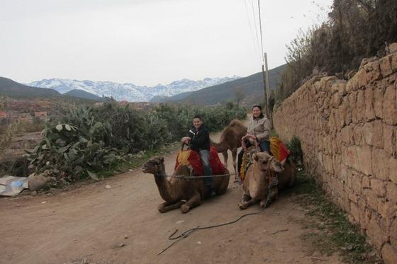 Camel 13