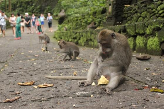 Monkey 05