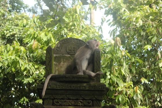 Monkey 18
