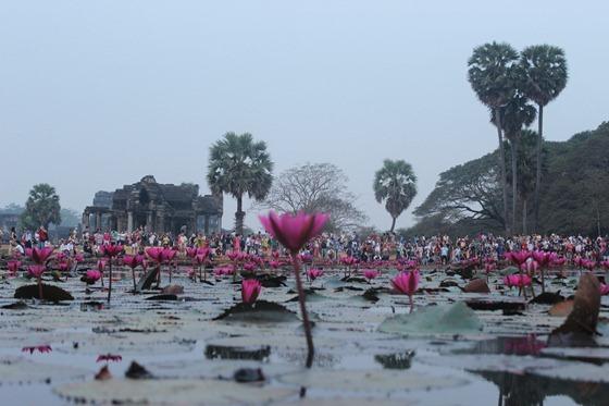 Angkor Wat 06