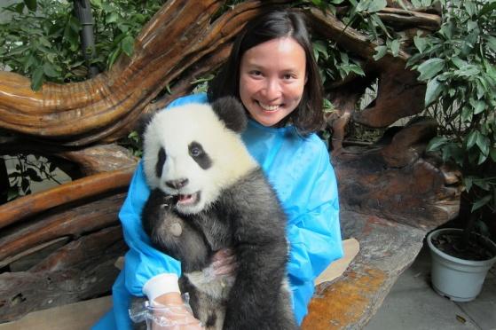 Panda Me!