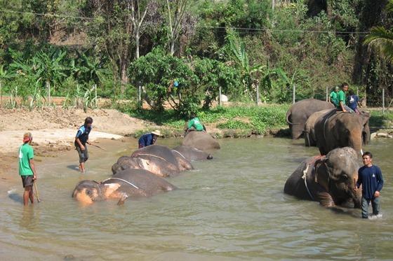 Chiang Mai 562