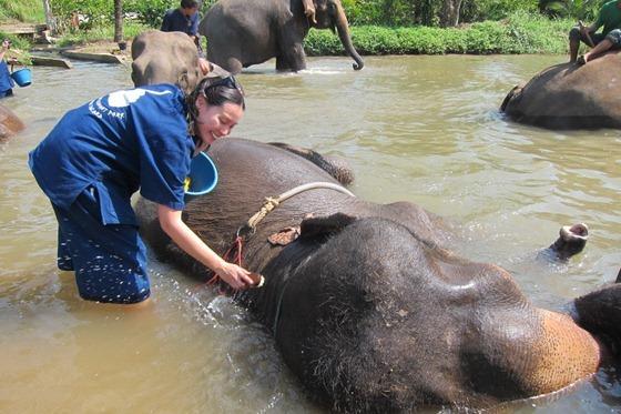Chiang Mai 565