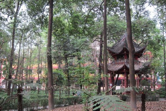 Chengdu 06