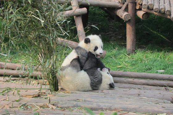 Pandas 07