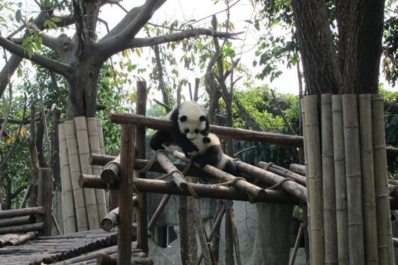 Pandas 08