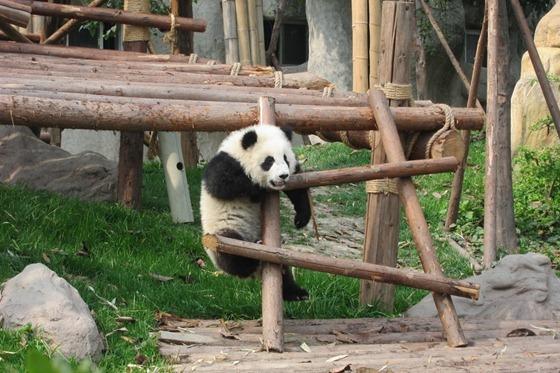 Pandas 09