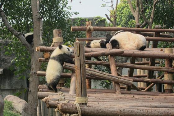 Pandas 10