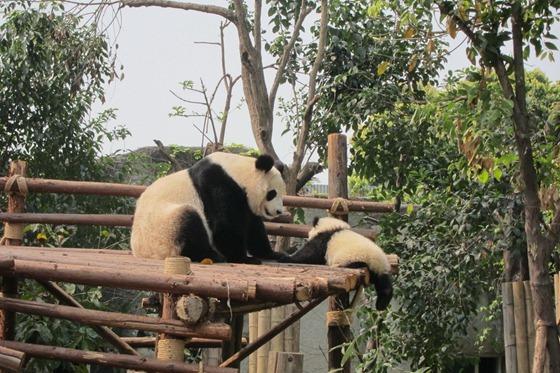 Pandas 11