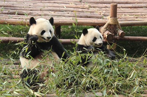 Pandas 14