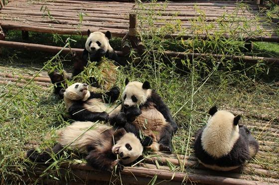 Pandas 15