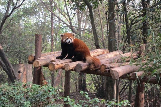 Pandas 18