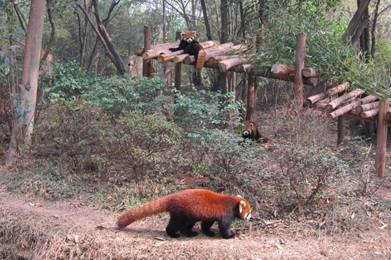 Pandas 19