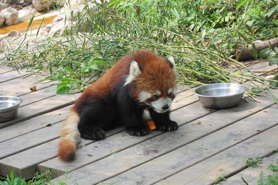 Pandas 20