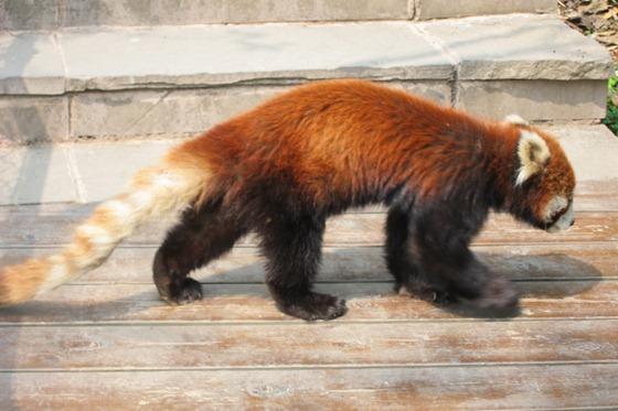 Pandas 21