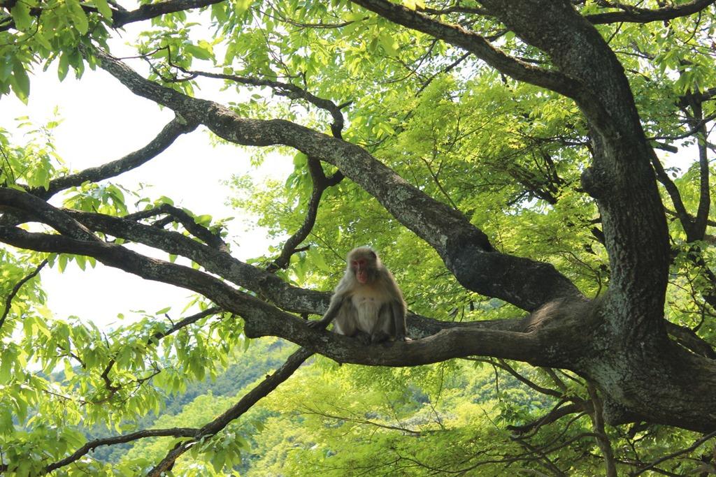 Arashiyama 07