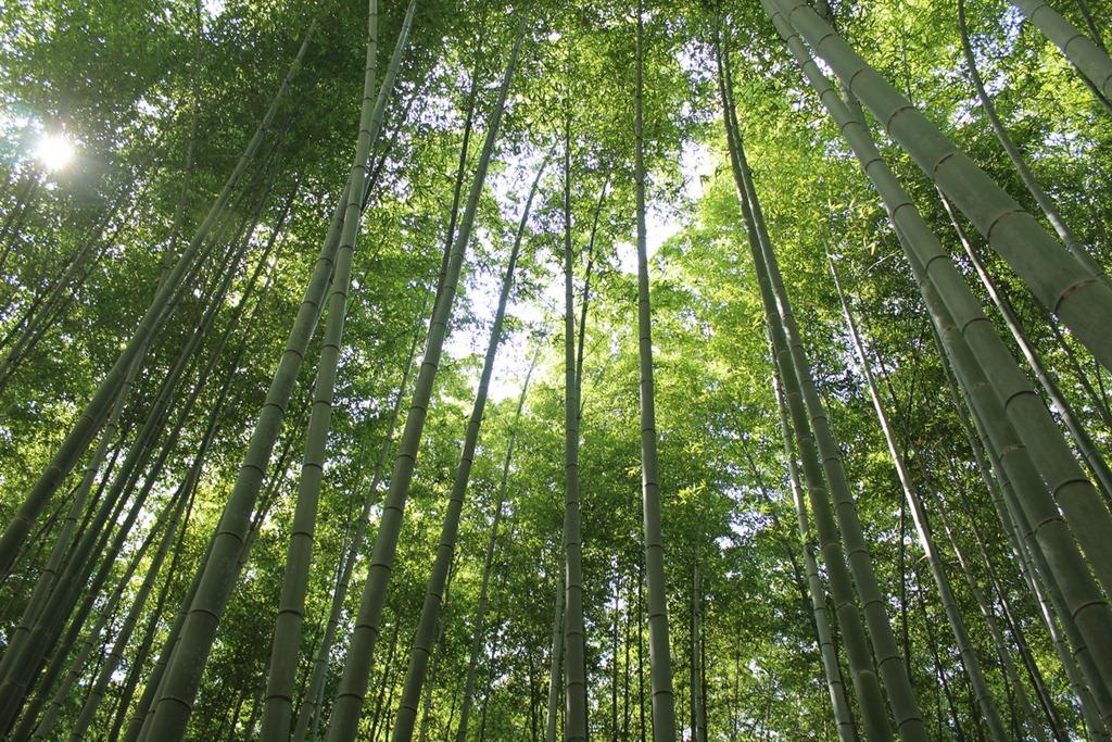 Arashiyama 15