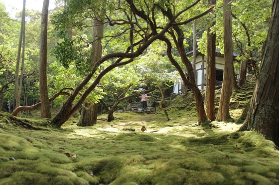 Moss Temple 11