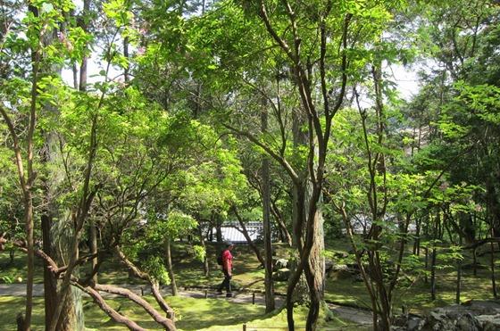 Moss Temple 19
