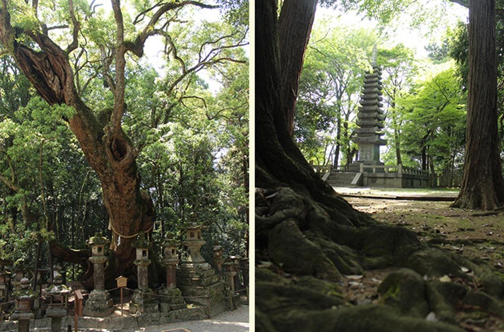 Nara Trees