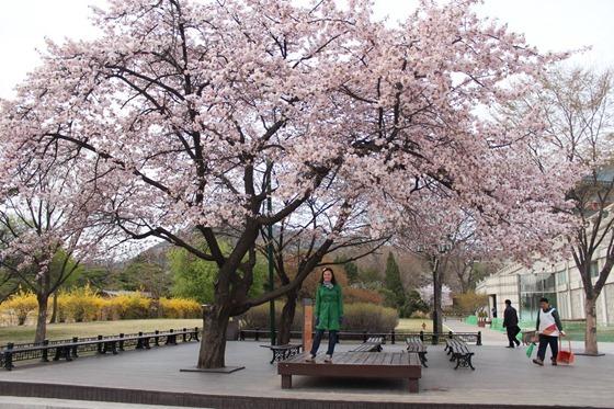 Seoul 13