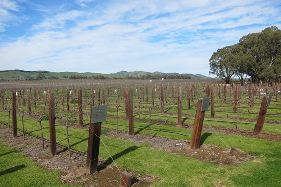 Barossa Wineries 01
