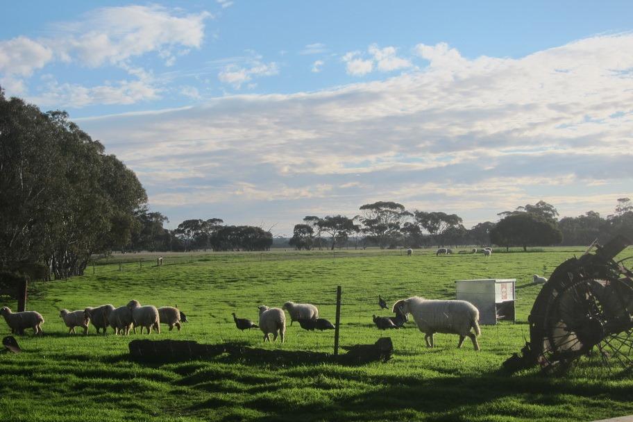How Far From Adelaide To Kangaroo Island