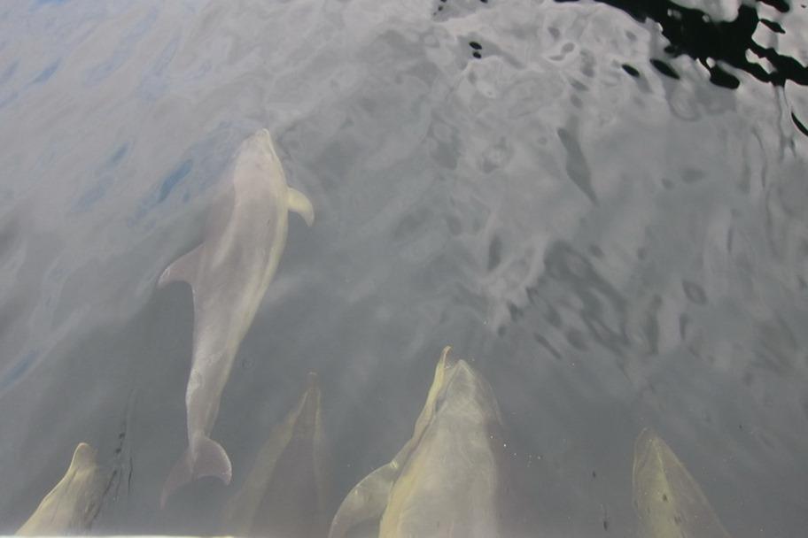 Milford Sound 18