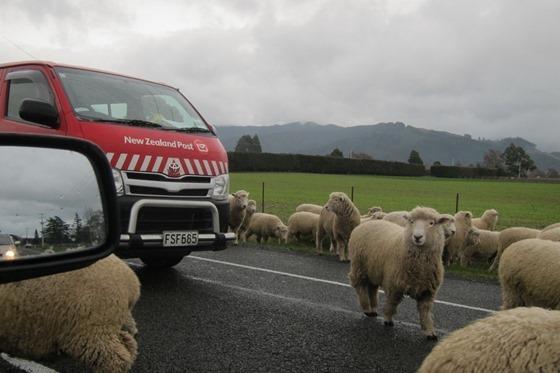 NZ Driving 008