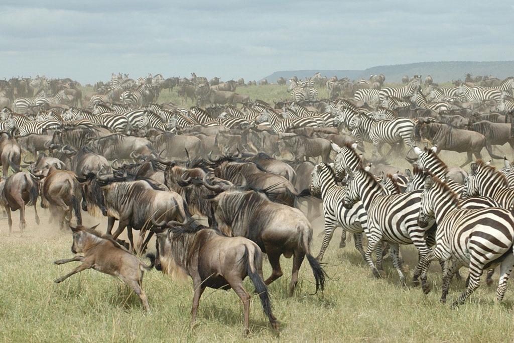 african-safari-serengeti-may-13-2009