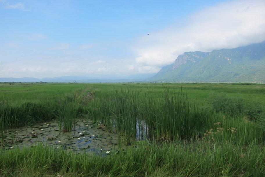 Lake Manyara 002