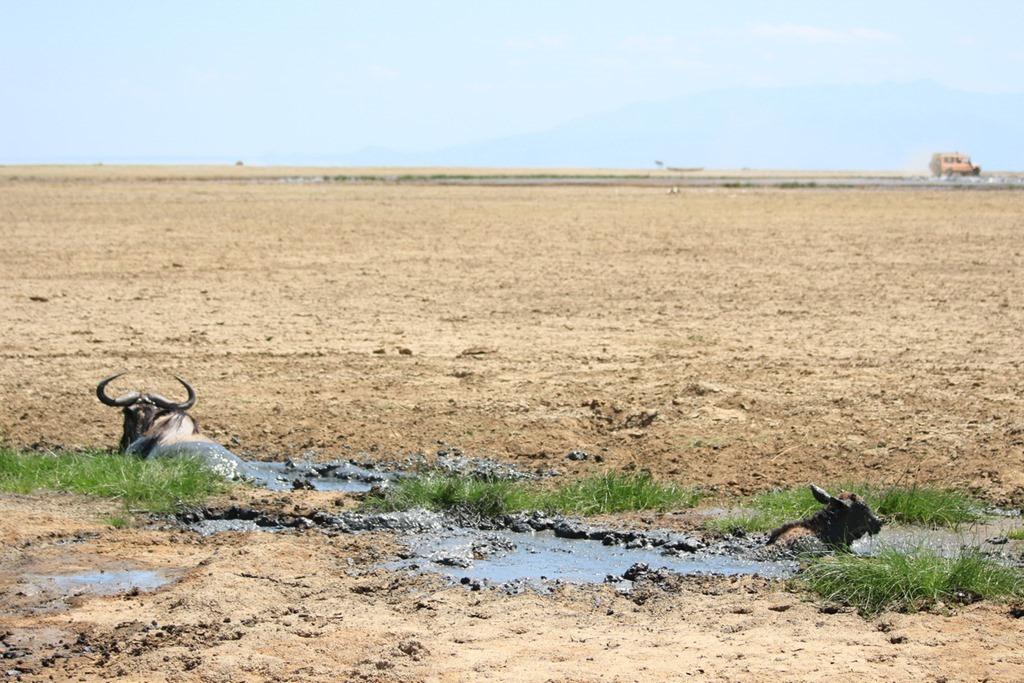 Lake Manyara 014