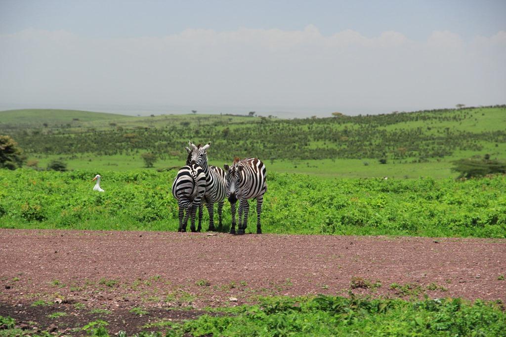 Ngorongo Park Day 1 004