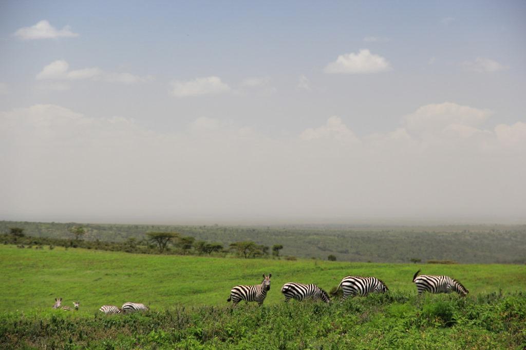 Ngorongo Park Day 1 005