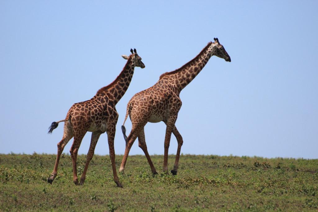 Ngorongo Park Day 1 006