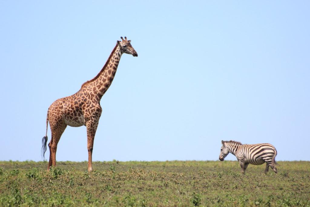 Ngorongo Park Day 1 007