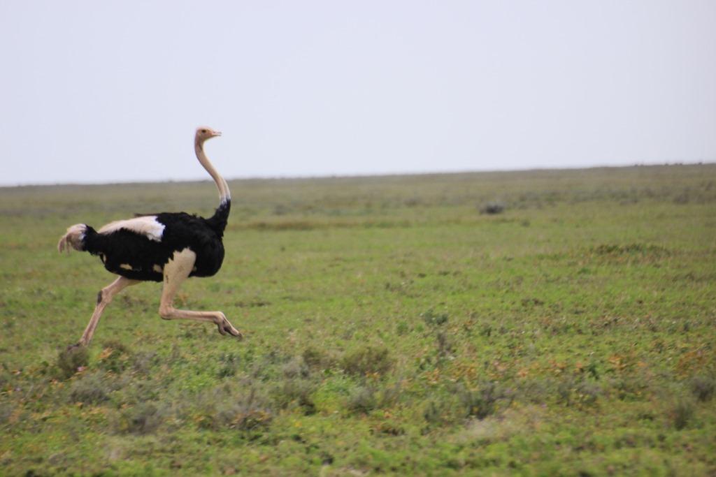 Ngorongo Park Day 1 011