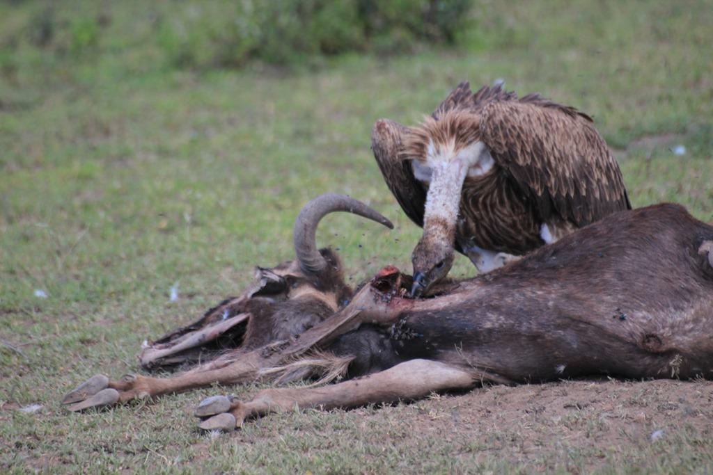 Ngorongo Park Day 1 012