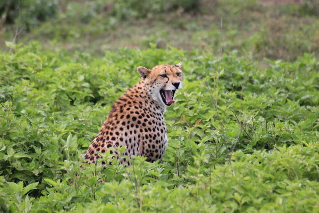 Ngorongo Park Day 1 013