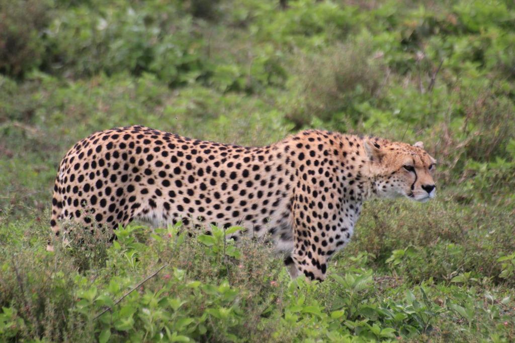 Ngorongo Park Day 1 014