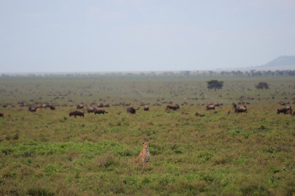 Ngorongo Park Day 1 016