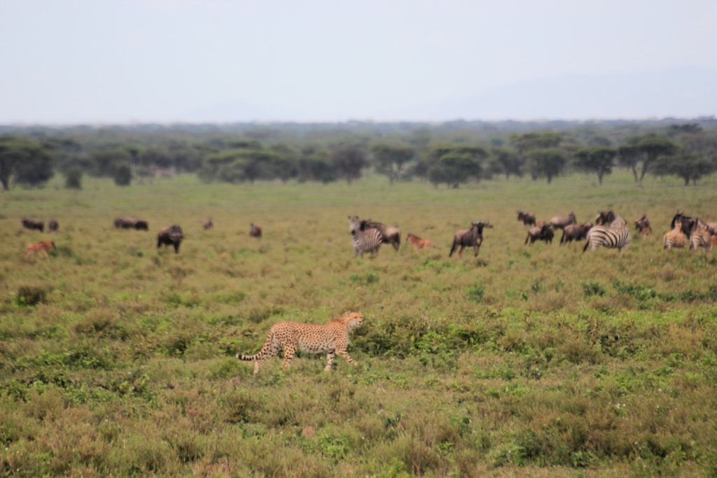 Ngorongo Park Day 1 017
