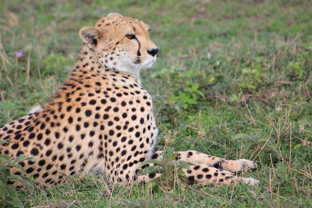 Ngorongo Park Day 1 018