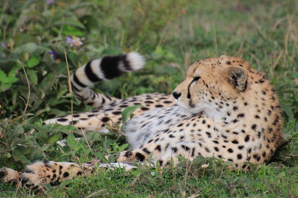 Ngorongo Park Day 1 019