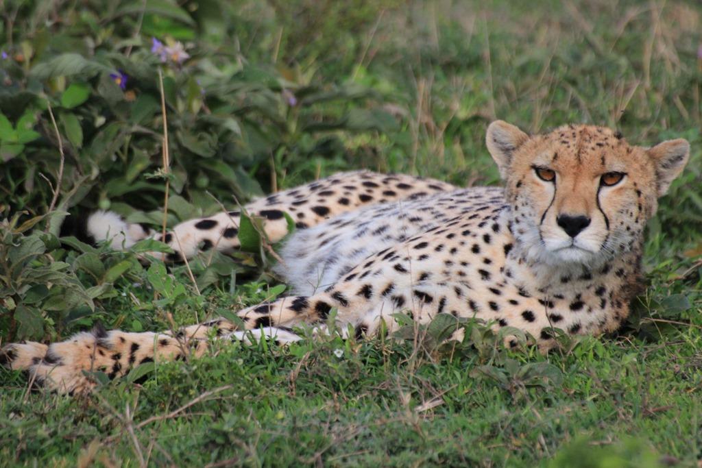 Ngorongo Park Day 1 020