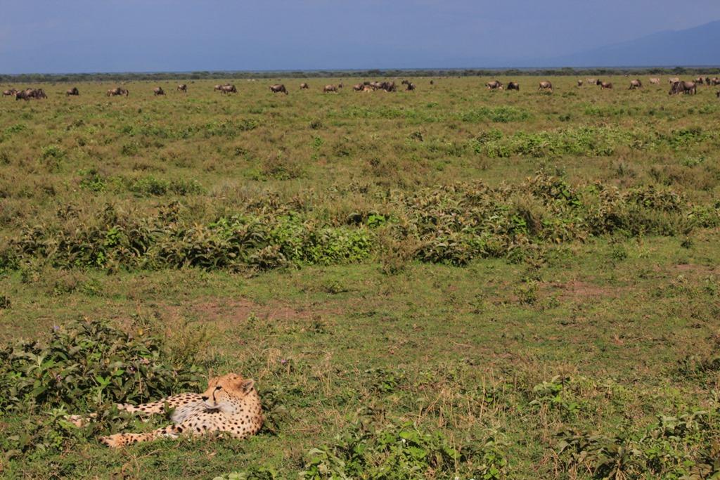 Ngorongo Park Day 1 021