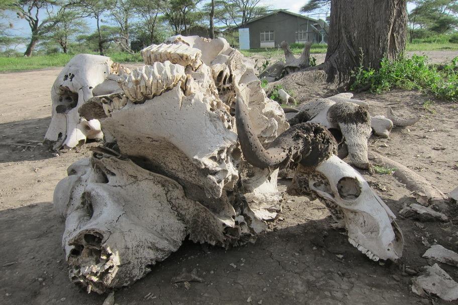 Ngorongo Park Day 1 029